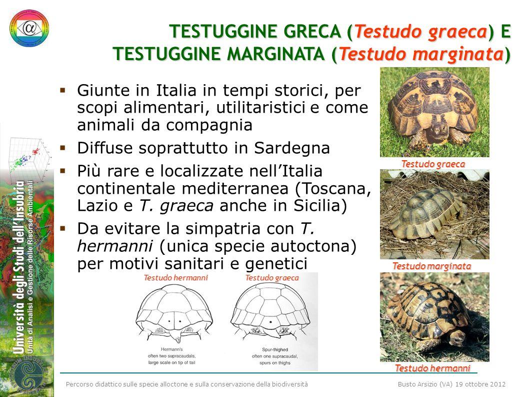 Percorso didattico sulle specie alloctone e sulla conservazione della biodiversità Busto Arsizio (VA) 19 ottobre 2012 TESTUGGINE GRECA (Testudo graeca