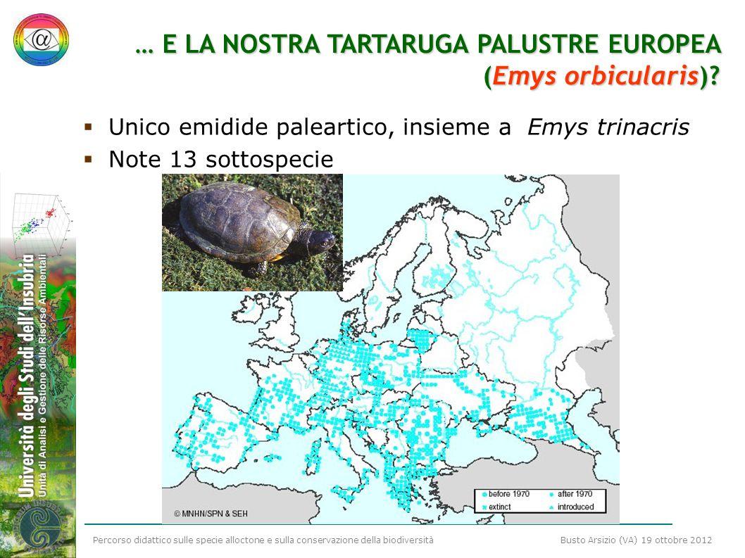 Percorso didattico sulle specie alloctone e sulla conservazione della biodiversità Busto Arsizio (VA) 19 ottobre 2012 … E LA NOSTRA TARTARUGA PALUSTRE