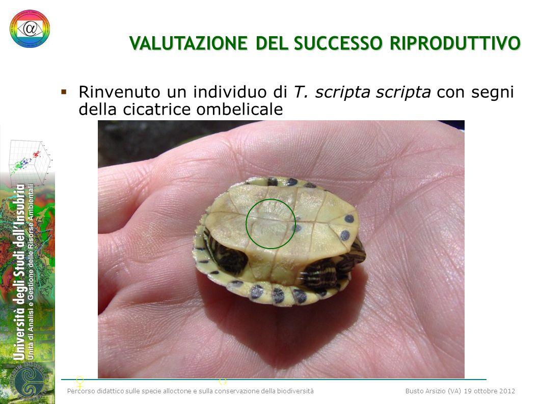 Percorso didattico sulle specie alloctone e sulla conservazione della biodiversità Busto Arsizio (VA) 19 ottobre 2012 VALUTAZIONE DEL SUCCESSO RIPRODU