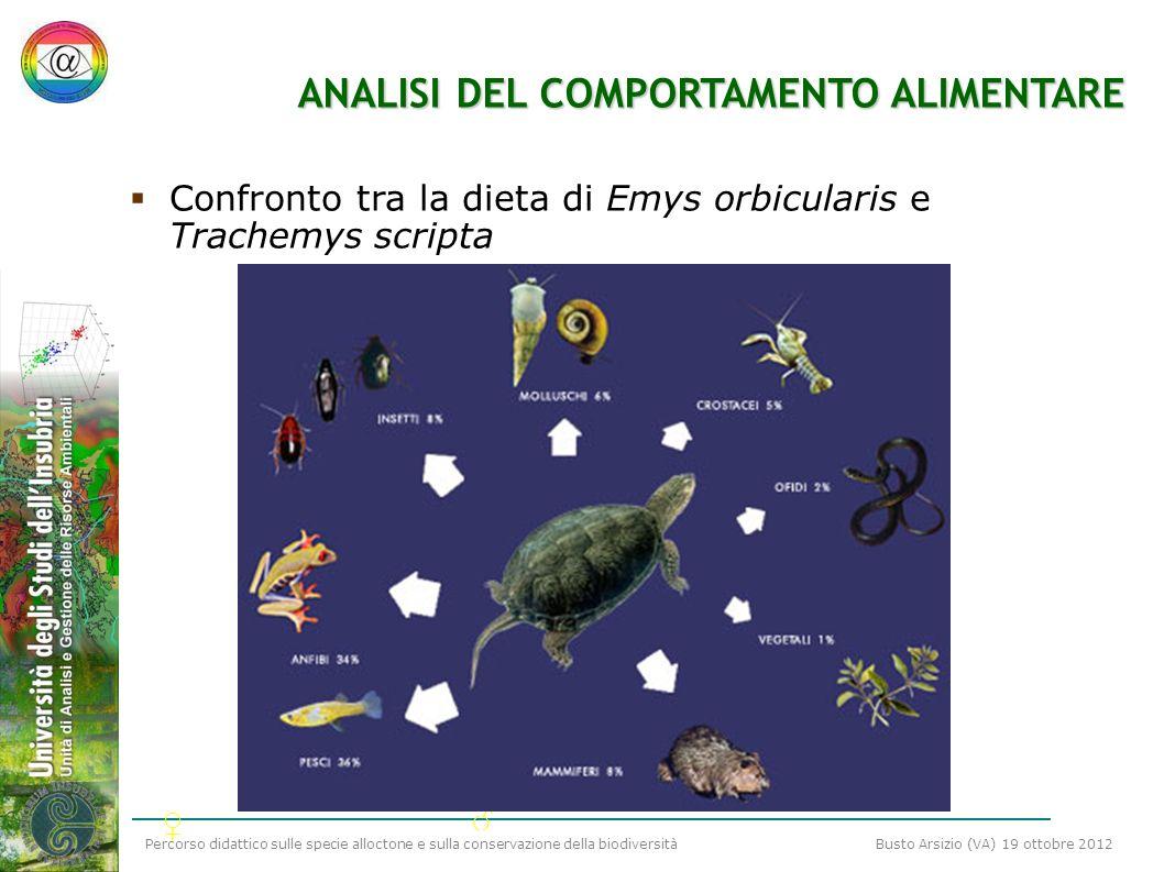 Percorso didattico sulle specie alloctone e sulla conservazione della biodiversità Busto Arsizio (VA) 19 ottobre 2012 ANALISI DEL COMPORTAMENTO ALIMEN