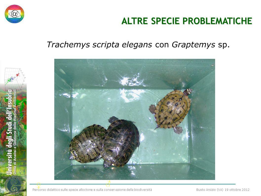 Percorso didattico sulle specie alloctone e sulla conservazione della biodiversità Busto Arsizio (VA) 19 ottobre 2012 ALTRE SPECIE PROBLEMATICHE Trach