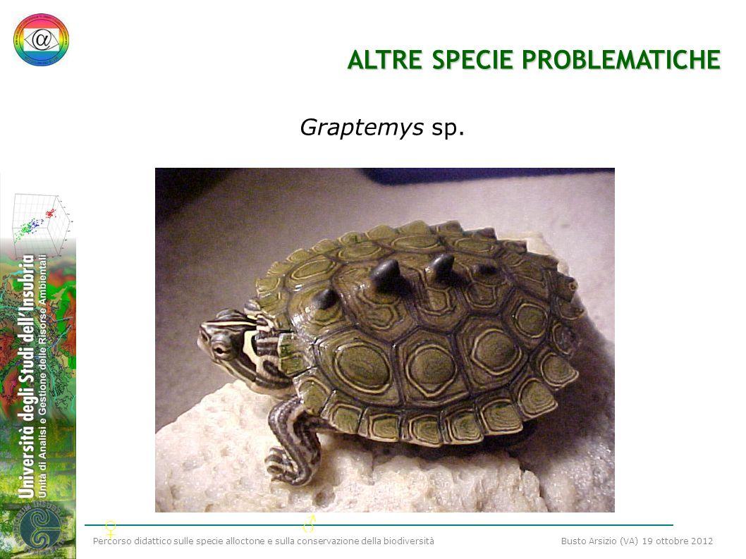 Percorso didattico sulle specie alloctone e sulla conservazione della biodiversità Busto Arsizio (VA) 19 ottobre 2012 ALTRE SPECIE PROBLEMATICHE Grapt