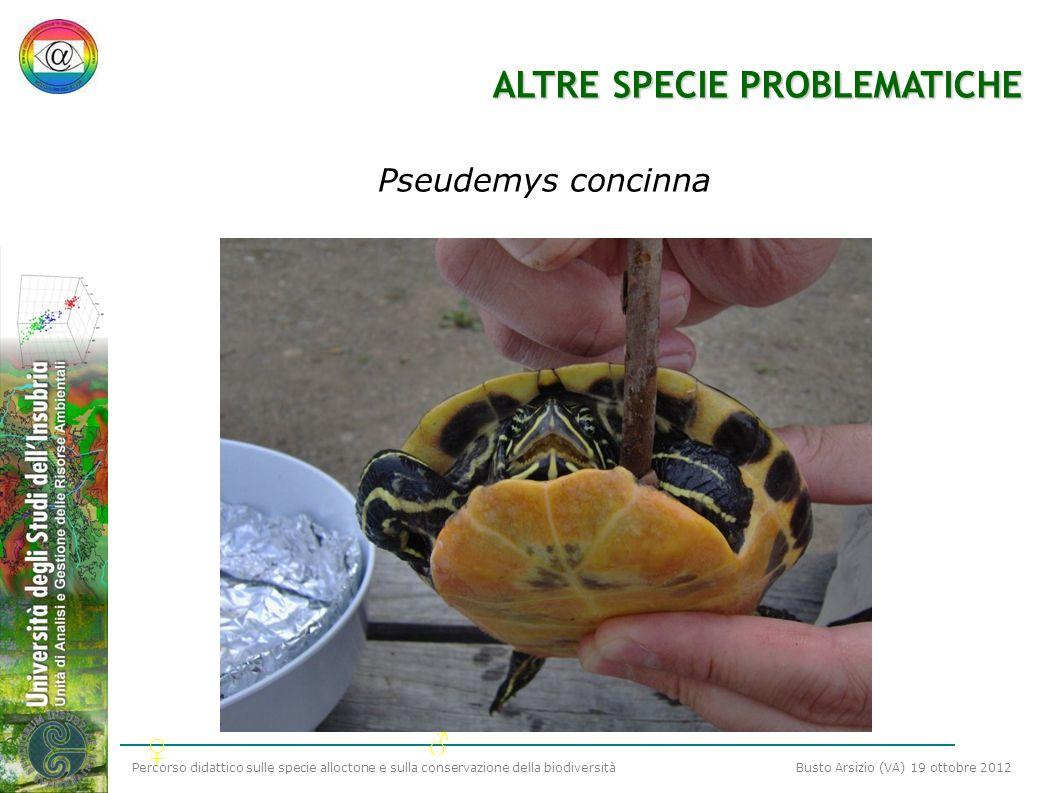 Percorso didattico sulle specie alloctone e sulla conservazione della biodiversità Busto Arsizio (VA) 19 ottobre 2012 ALTRE SPECIE PROBLEMATICHE Pseud