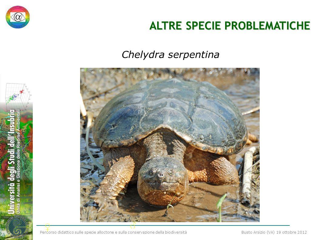 Percorso didattico sulle specie alloctone e sulla conservazione della biodiversità Busto Arsizio (VA) 19 ottobre 2012 ALTRE SPECIE PROBLEMATICHE Chely