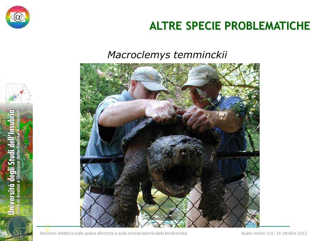 Percorso didattico sulle specie alloctone e sulla conservazione della biodiversità Busto Arsizio (VA) 19 ottobre 2012 ALTRE SPECIE PROBLEMATICHE Macro