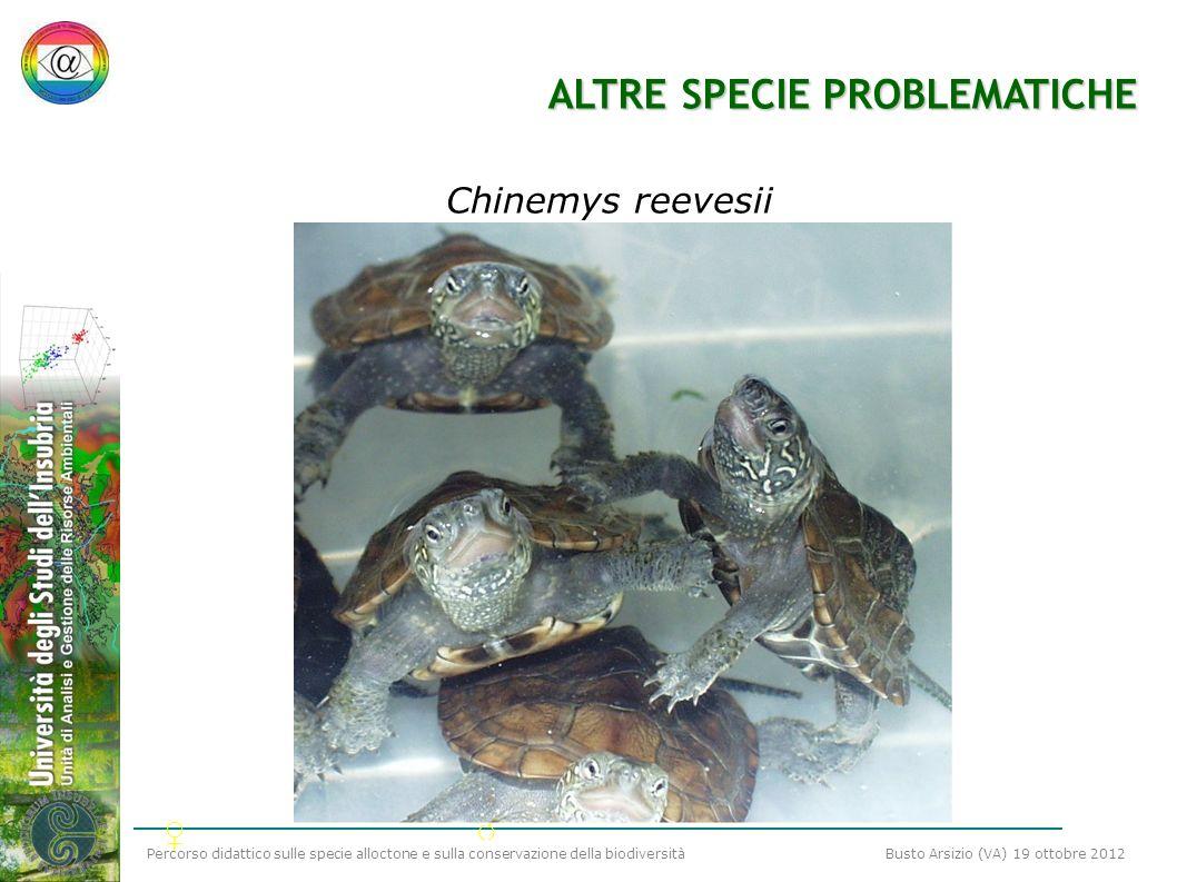 Percorso didattico sulle specie alloctone e sulla conservazione della biodiversità Busto Arsizio (VA) 19 ottobre 2012 ALTRE SPECIE PROBLEMATICHE Chine