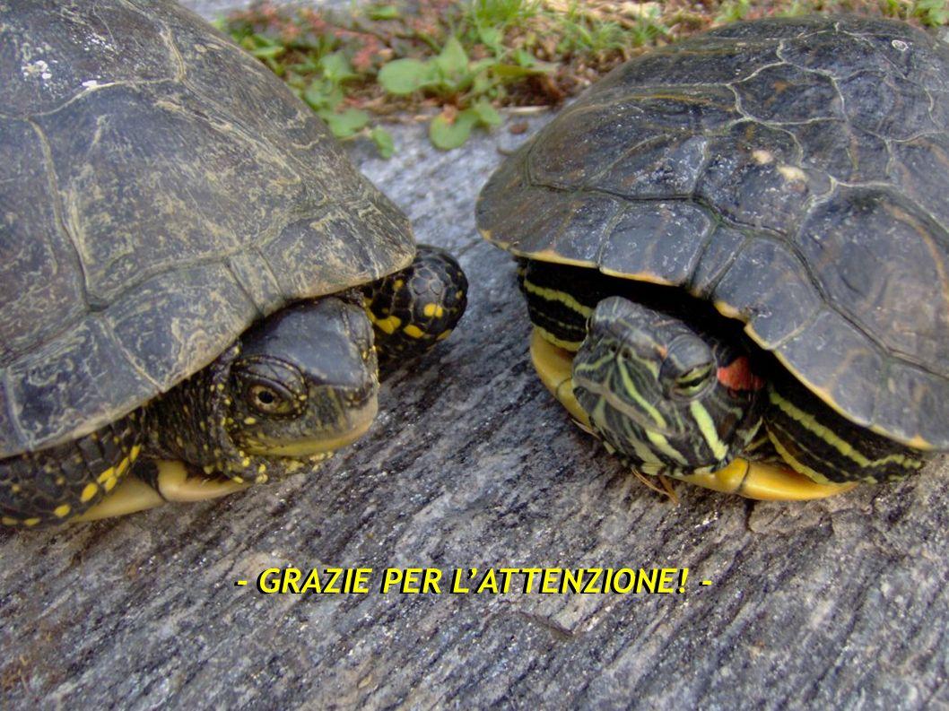 Percorso didattico sulle specie alloctone e sulla conservazione della biodiversità Busto Arsizio (VA) 19 ottobre 2012 - GRAZIE PER LATTENZIONE! -