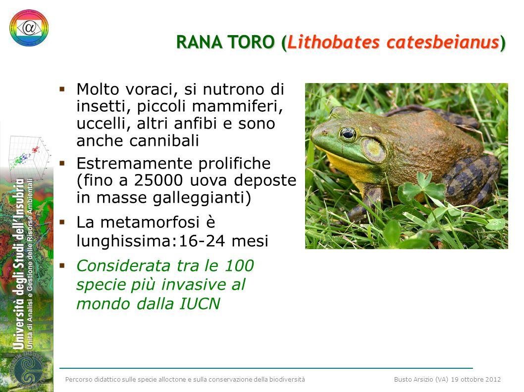 Percorso didattico sulle specie alloctone e sulla conservazione della biodiversità Busto Arsizio (VA) 19 ottobre 2012 RANA TORO (Lithobates catesbeian
