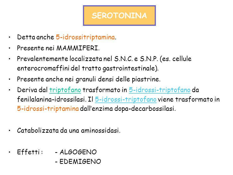 SEROTONINA Detta anche 5-idrossitriptamina. Presente nei MAMMIFERI. Prevalentemente localizzata nel S.N.C. e S.N.P. (es. cellule enterocromaffini del