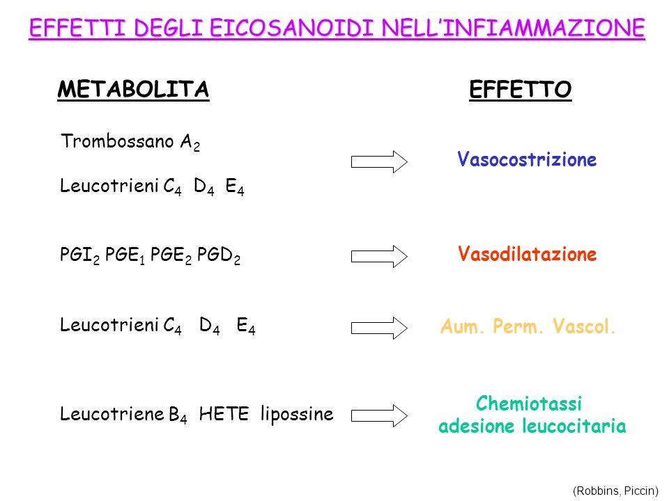 EFFETTI DEGLI EICOSANOIDI NELLINFIAMMAZIONE METABOLITA EFFETTO Vasocostrizione Trombossano A 2 Leucotrieni C 4 D 4 E 4 Vasodilatazione PGI 2 PGE 1 PGE
