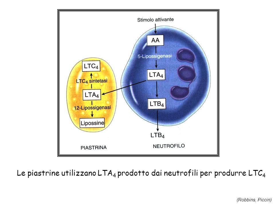 Le piastrine utilizzano LTA 4 prodotto dai neutrofili per produrre LTC 4