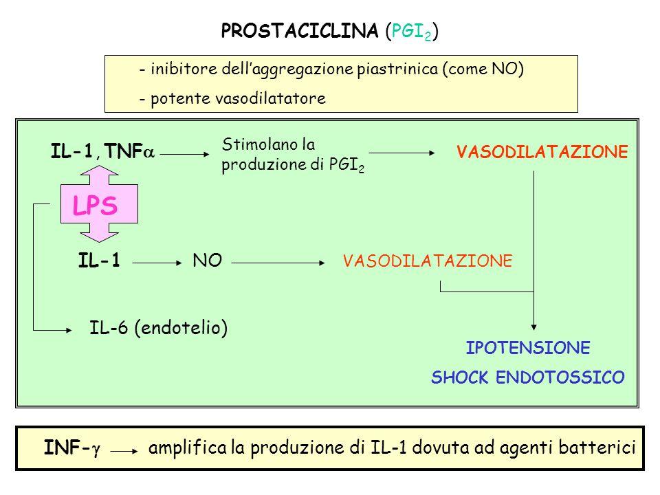 - inibitore dellaggregazione piastrinica (come NO) - potente vasodilatatore IL-1, TNF VASODILATAZIONE Stimolano la produzione di PGI 2 LPS IL-6 (endot