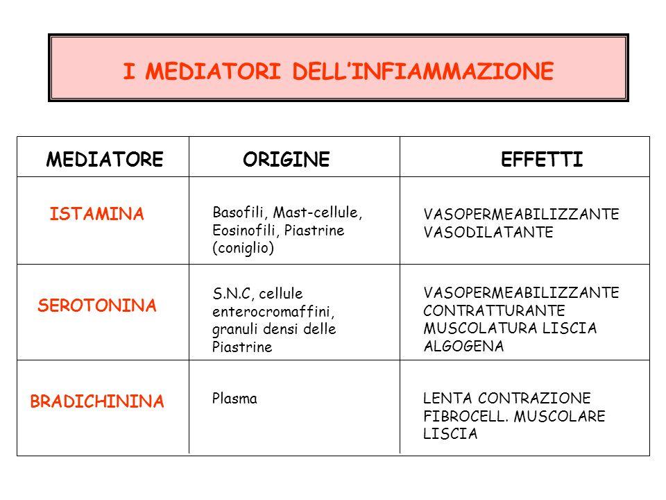I MEDIATORI DELLINFIAMMAZIONE SEROTONINA S.N.C, cellule enterocromaffini, granuli densi delle Piastrine VASOPERMEABILIZZANTE CONTRATTURANTE MUSCOLATUR