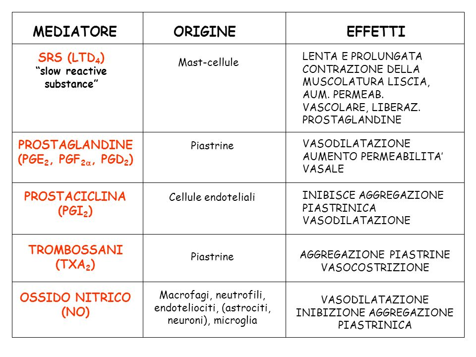 SRS (LTD 4 ) slow reactive substance Mast-cellule LENTA E PROLUNGATA CONTRAZIONE DELLA MUSCOLATURA LISCIA, AUM. PERMEAB. VASCOLARE, LIBERAZ. PROSTAGLA