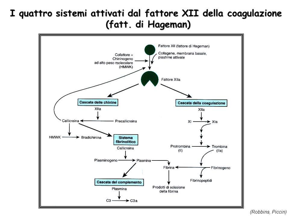 I quattro sistemi attivati dal fattore XII della coagulazione (fatt. di Hageman) (Robbins, Piccin)