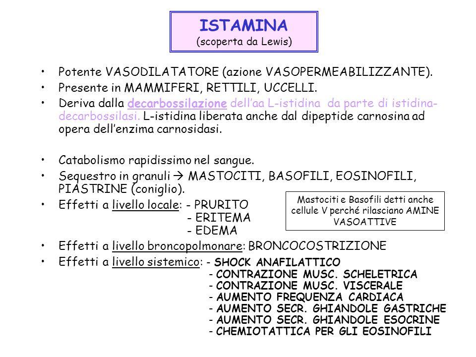 ISTAMINA (scoperta da Lewis) Potente VASODILATATORE (azione VASOPERMEABILIZZANTE). Presente in MAMMIFERI, RETTILI, UCCELLI. Deriva dalla decarbossilaz