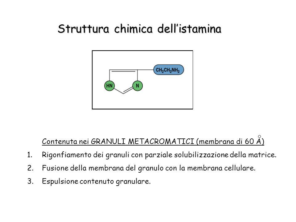 Struttura chimica dellistamina Contenuta nei GRANULI METACROMATICI (membrana di 60 A) 1.Rigonfiamento dei granuli con parziale solubilizzazione della