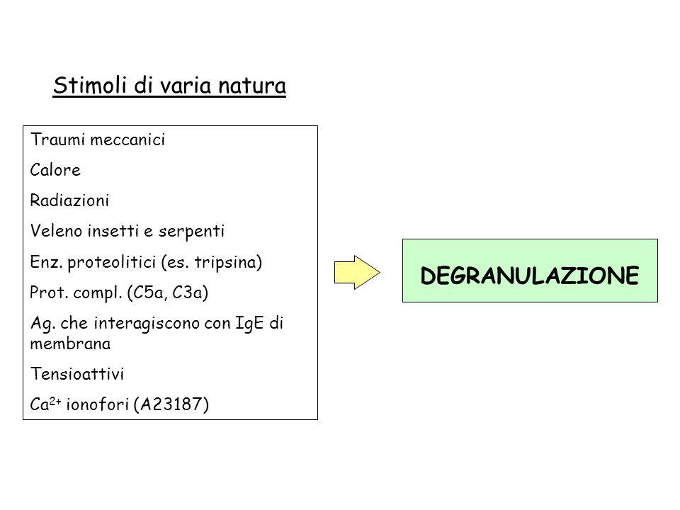 Traumi meccanici Calore Radiazioni Veleno insetti e serpenti Enz. proteolitici (es. tripsina) Prot. compl. (C5a, C3a) Ag. che interagiscono con IgE di