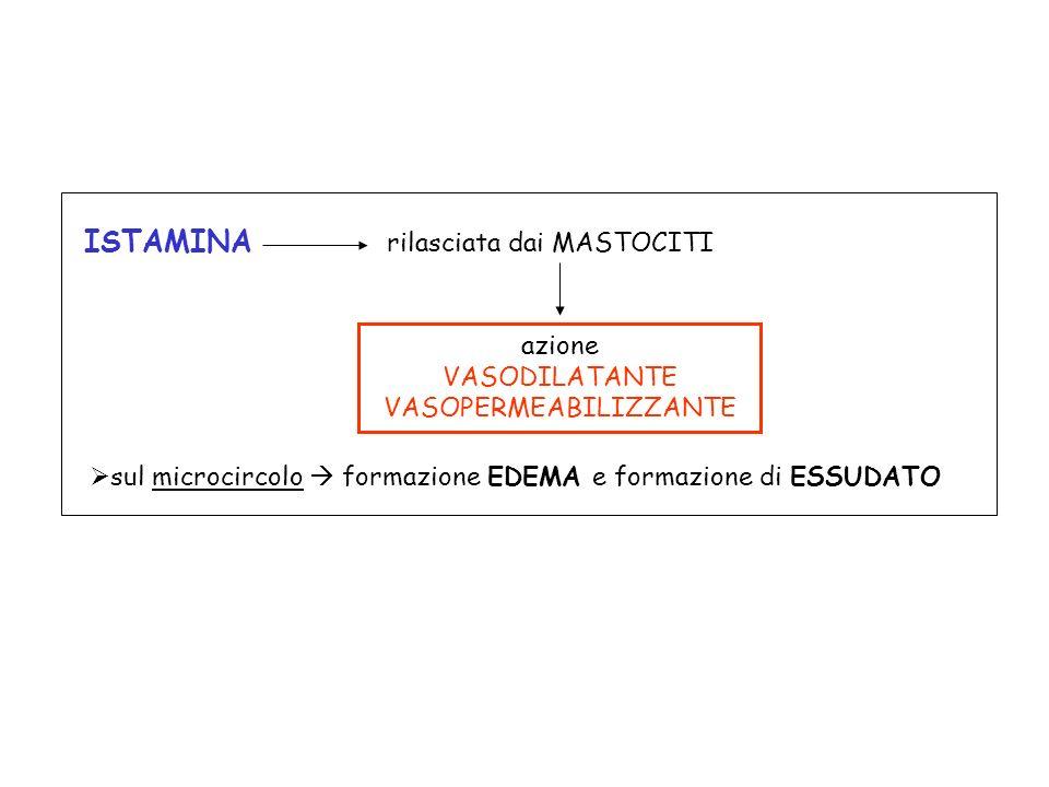 azione VASODILATANTE VASOPERMEABILIZZANTE sul microcircolo formazione EDEMA e formazione di ESSUDATO ISTAMINA rilasciata dai MASTOCITI