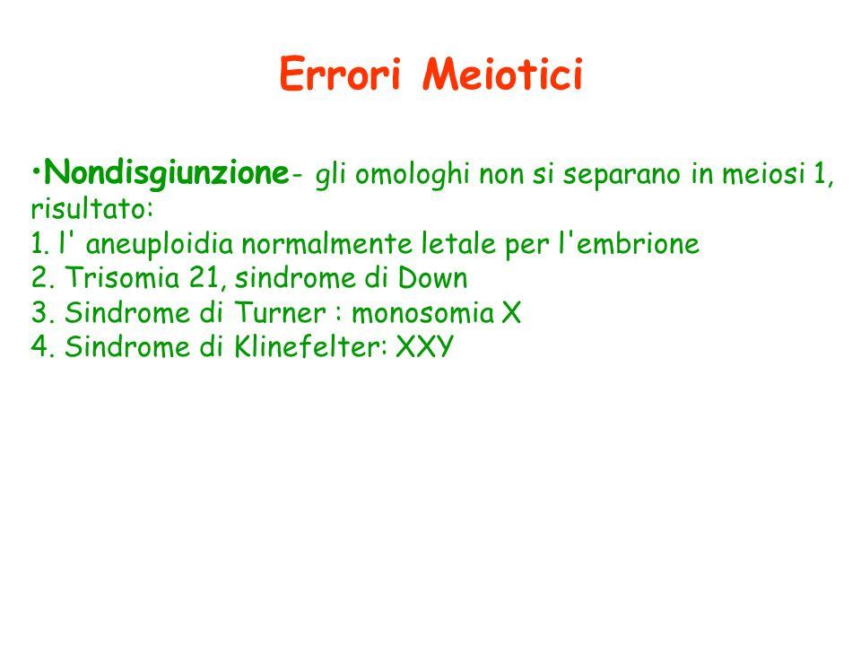Errori Meiotici Nondisgiunzione - gli omologhi non si separano in meiosi 1, risultato: 1. l' aneuploidia normalmente letale per l'embrione 2. Trisomia