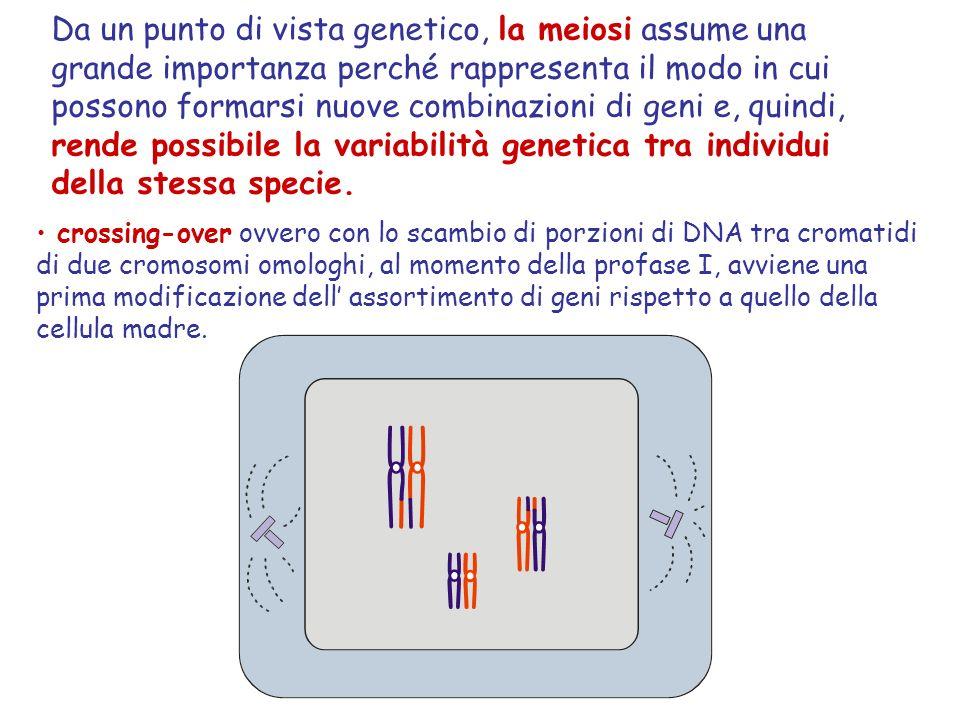 Da un punto di vista genetico, la meiosi assume una grande importanza perché rappresenta il modo in cui possono formarsi nuove combinazioni di geni e,