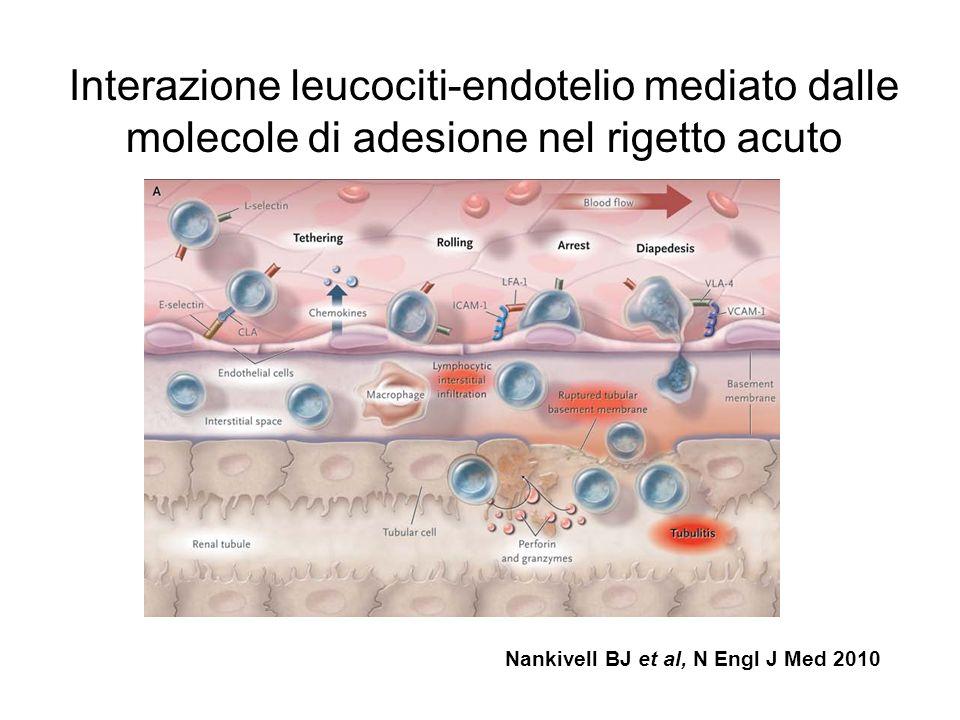 Interazione leucociti-endotelio mediato dalle molecole di adesione nel rigetto acuto Nankivell BJ et al, N Engl J Med 2010