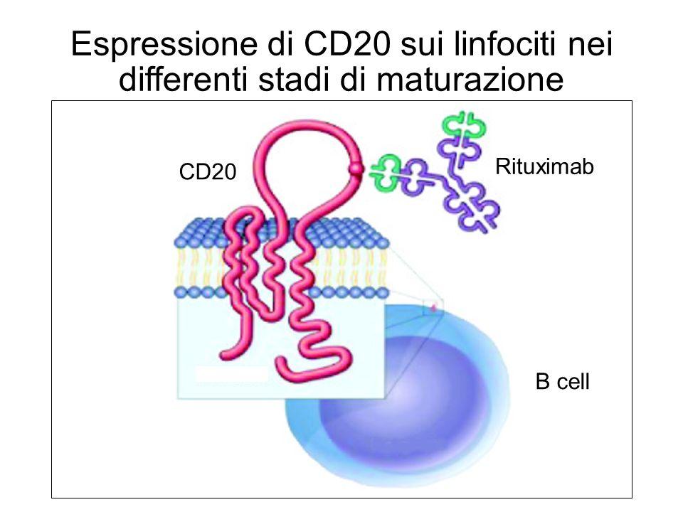 Espressione di CD20 sui linfociti nei differenti stadi di maturazione Pescovitz MD, et al.
