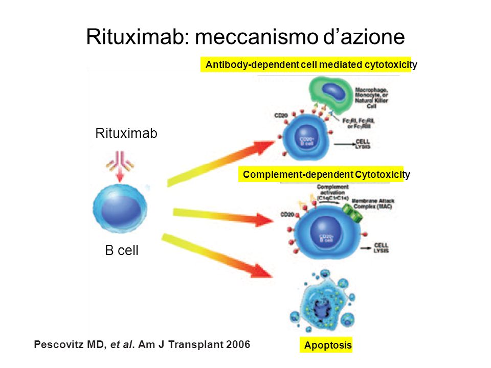 Rituximab: meccanismo dazione Rituximab B cell Complement-dependent Cytotoxicity Apoptosis Antibody-dependent cell mediated cytotoxicity Pescovitz MD,