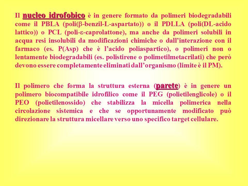 parete Il polimero che forma la struttura esterna ( parete ) è in genere un polimero biocompatibile idrofilico come il PEG (polietilenglicole) o il PE