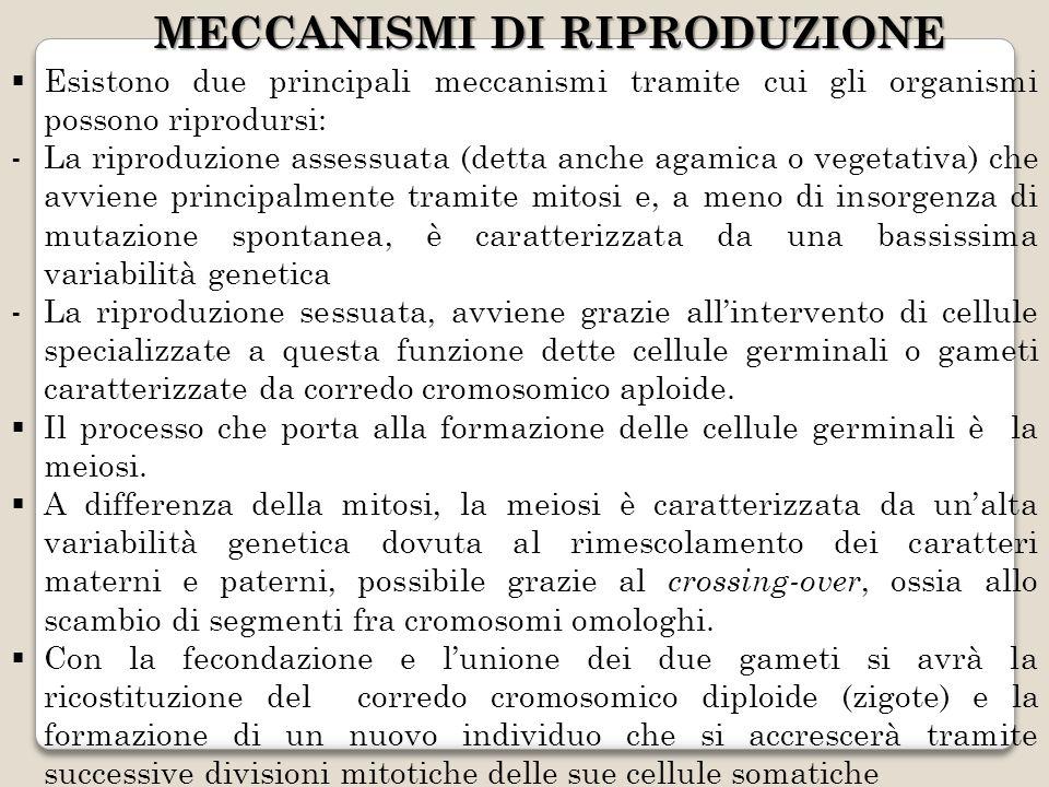 MECCANISMI DI RIPRODUZIONE Esistono due principali meccanismi tramite cui gli organismi possono riprodursi: -La riproduzione assessuata (detta anche agamica o vegetativa) che avviene principalmente tramite mitosi e, a meno di insorgenza di mutazione spontanea, è caratterizzata da una bassissima variabilità genetica -La riproduzione sessuata, avviene grazie allintervento di cellule specializzate a questa funzione dette cellule germinali o gameti caratterizzate da corredo cromosomico aploide.