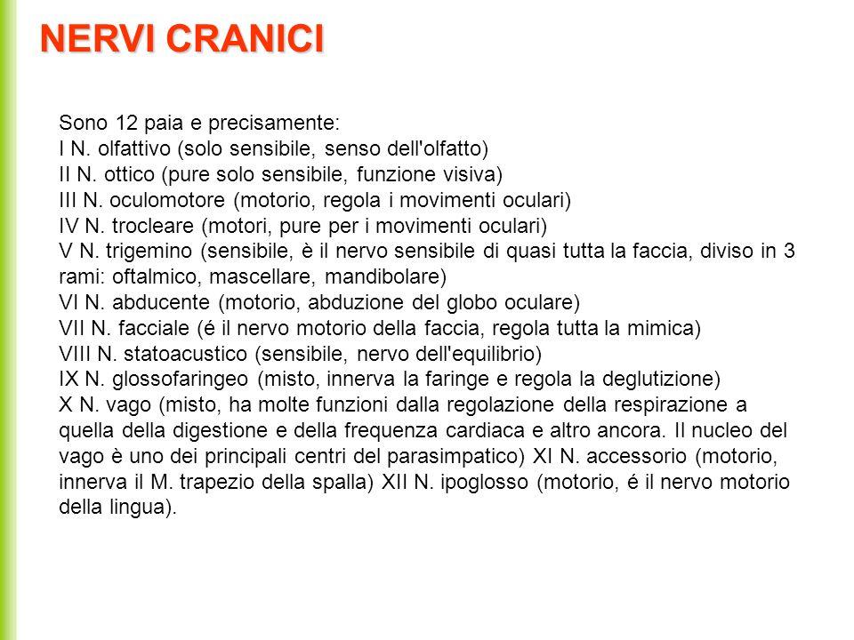 NERVI CRANICI Sono 12 paia e precisamente: I N. olfattivo (solo sensibile, senso dell'olfatto) II N. ottico (pure solo sensibile, funzione visiva) III