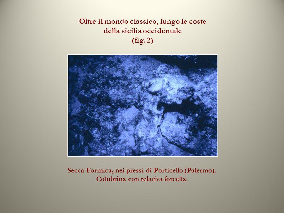 Oltre il mondo classico, lungo le coste della sicilia occidentale (fig. 2) Secca Formica, nei pressi di Porticello (Palermo). Colubrina con relativa f