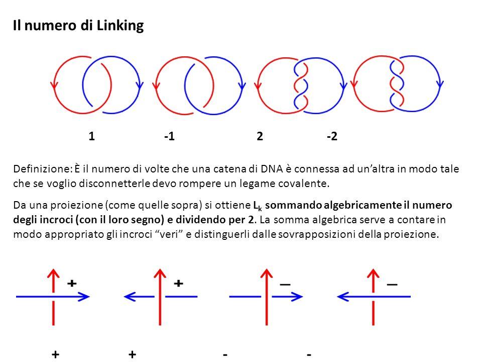 Il numero di Linking Definizione: È il numero di volte che una catena di DNA è connessa ad unaltra in modo tale che se voglio disconnetterle devo romp