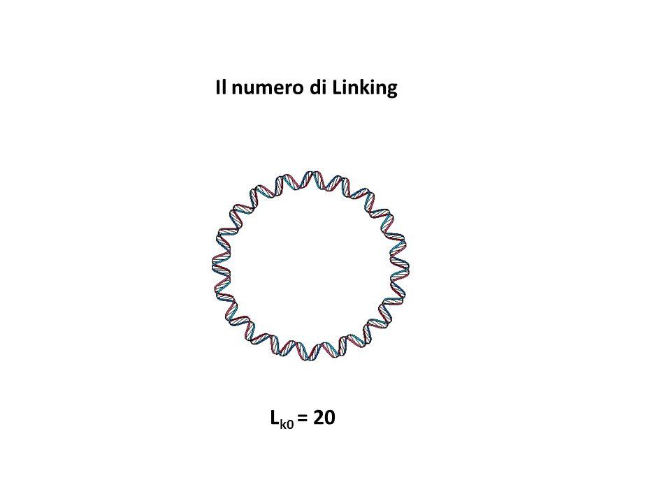Il numero di Linking L k0 = 20