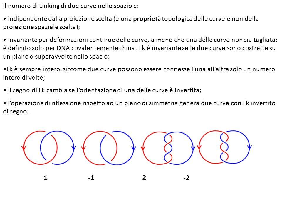 Il numero di Linking di due curve nello spazio è: indipendente dalla proiezione scelta (è una proprietà topologica delle curve e non della proiezione