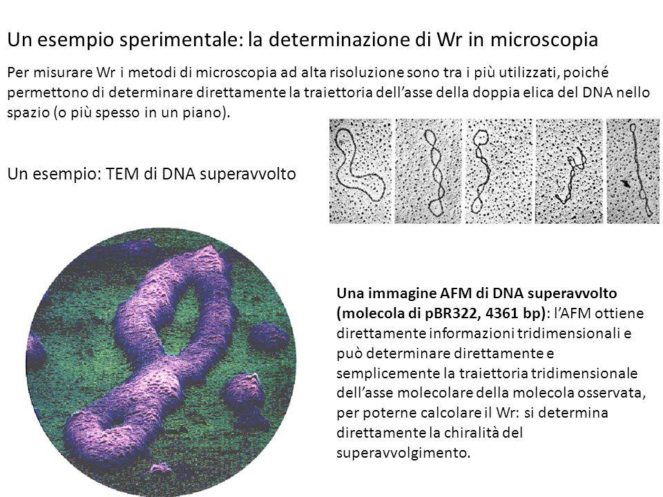 Un esempio sperimentale: la determinazione di Wr in microscopia Per misurare Wr i metodi di microscopia ad alta risoluzione sono tra i più utilizzati,
