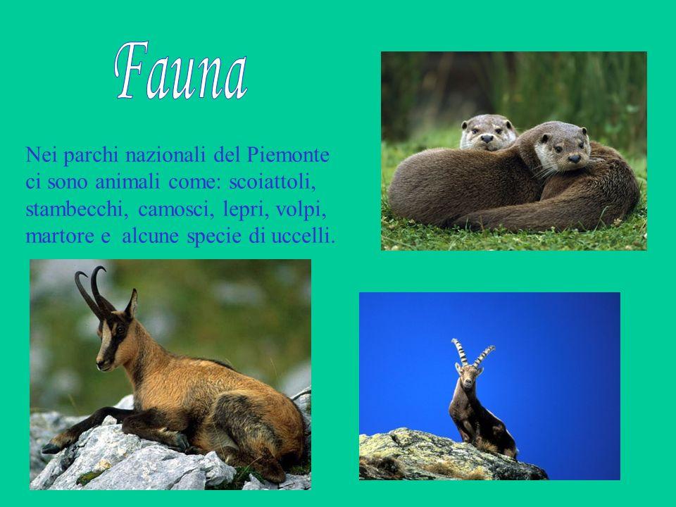 Nei parchi nazionali del Piemonte ci sono animali come: scoiattoli, stambecchi, camosci, lepri, volpi, martore e alcune specie di uccelli.