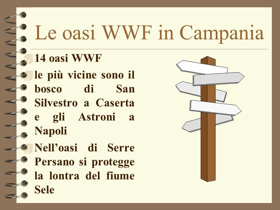 Le oasi WWF in Campania 4 14 oasi WWF 4 le più vicine sono il bosco di San Silvestro a Caserta e gli Astroni a Napoli 4 Nelloasi di Serre Persano si p