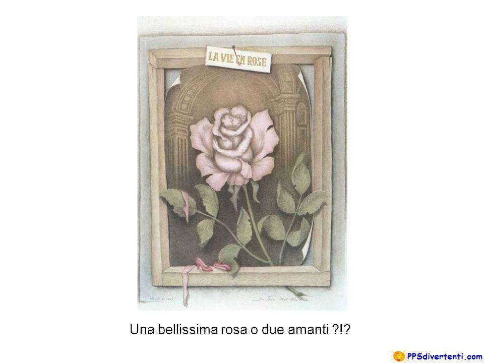 Una bellissima rosa o due amanti ?!?