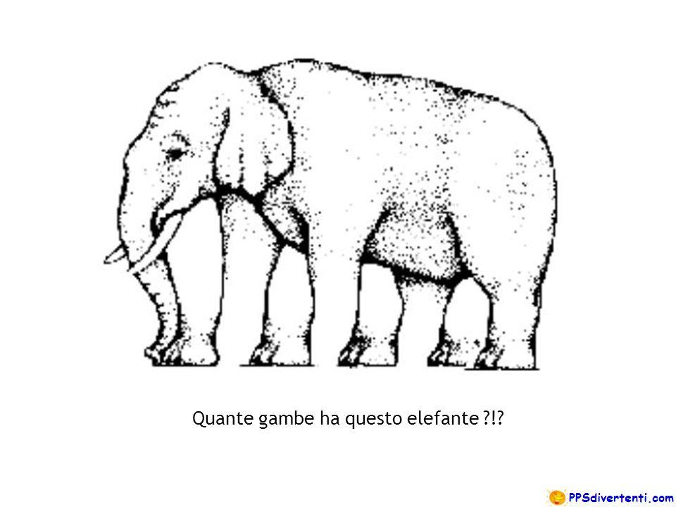 Quante gambe ha questo elefante ?!?