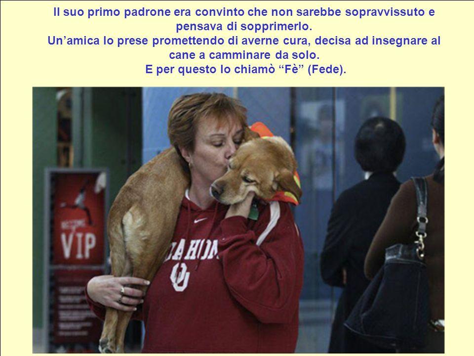 E la storia incredibile di un cane chiamato: FE Aquí está Fè cuando era un cachorrito Questo cucciolo è nato a Natale del 2002. E nato con 3 zampe, 2