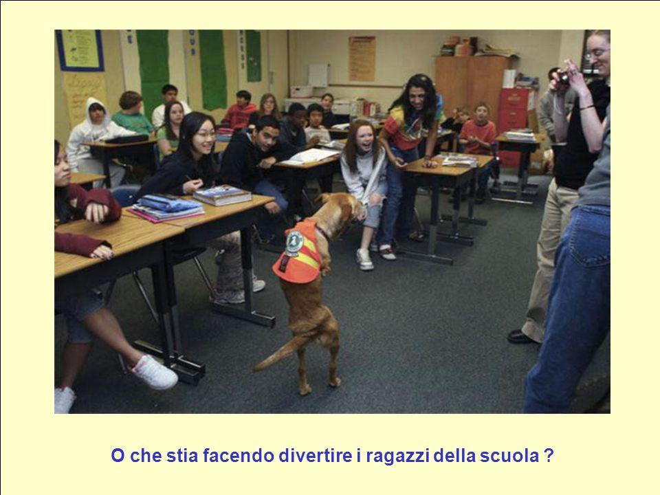 Pensate che il cane stia imitando luomo ?