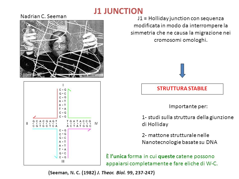 J1 JUNCTION J1 = Holliday junction con sequenza modificata in modo da interrompere la simmetria che ne causa la migrazione nei cromosomi omologhi.