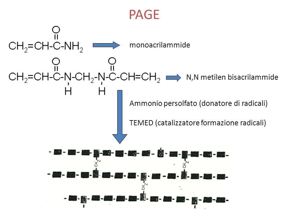 PAGE monoacrilammide N,N metilen bisacrilammide Ammonio persolfato (donatore di radicali) TEMED (catalizzatore formazione radicali)