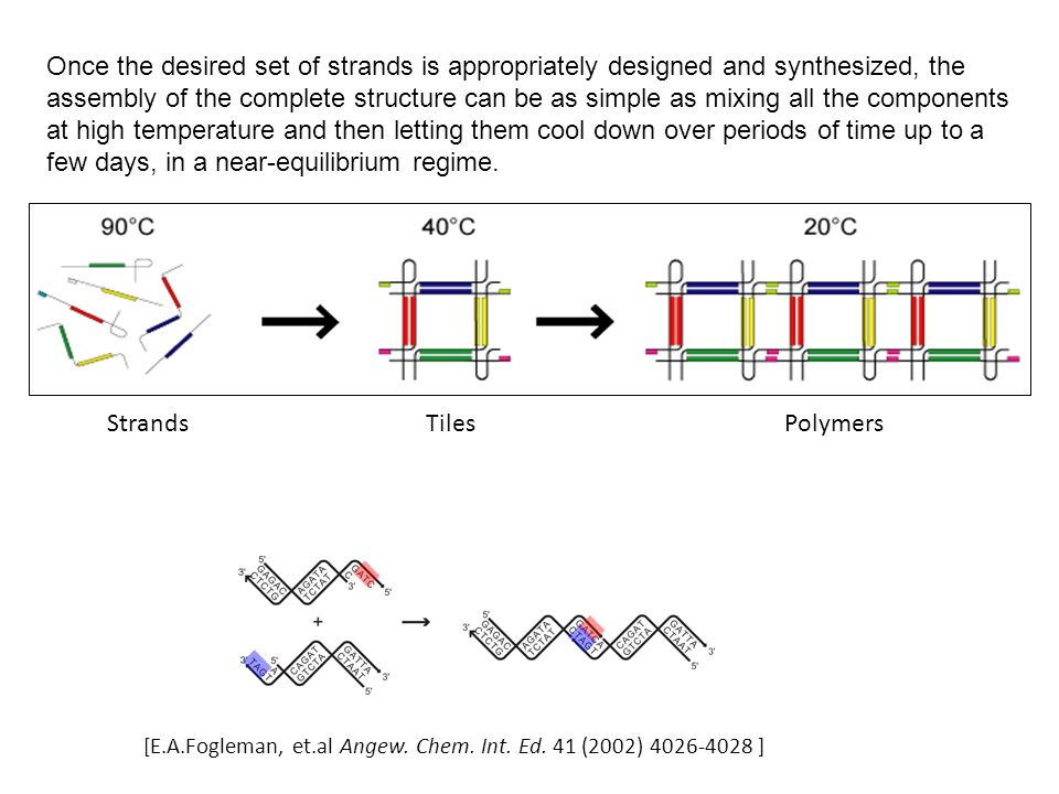 StrandsTilesPolymers [E.A.Fogleman, et.al Angew. Chem.