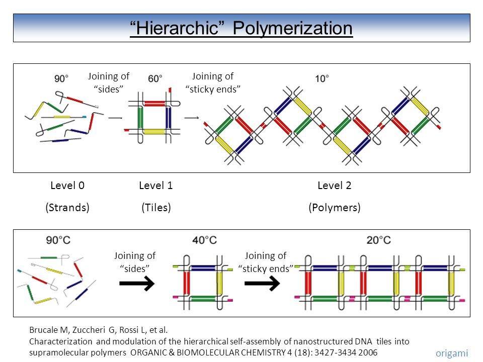 Hierarchic Polymerization Level 0 (Strands) Level 1 (Tiles) Level 2 (Polymers) Joining of sides Joining of sticky ends Joining of sides Joining of sticky ends Brucale M, Zuccheri G, Rossi L, et al.