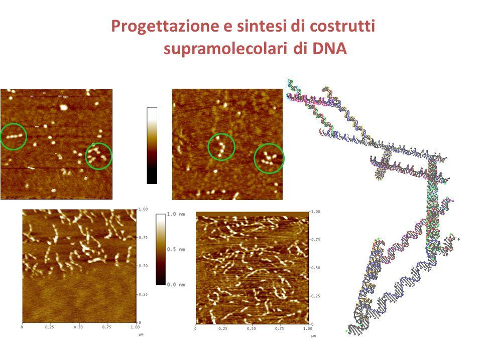 Progettazione e sintesi di costrutti supramolecolari di DNA