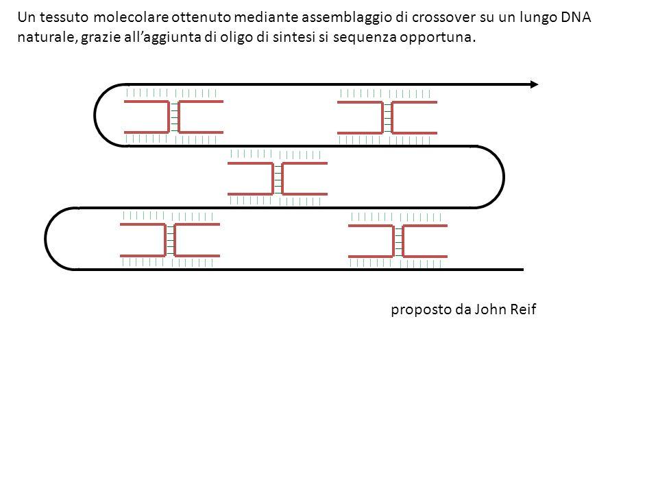 | | | | | | | | | | | | Un tessuto molecolare ottenuto mediante assemblaggio di crossover su un lungo DNA naturale, grazie allaggiunta di oligo di sintesi si sequenza opportuna.