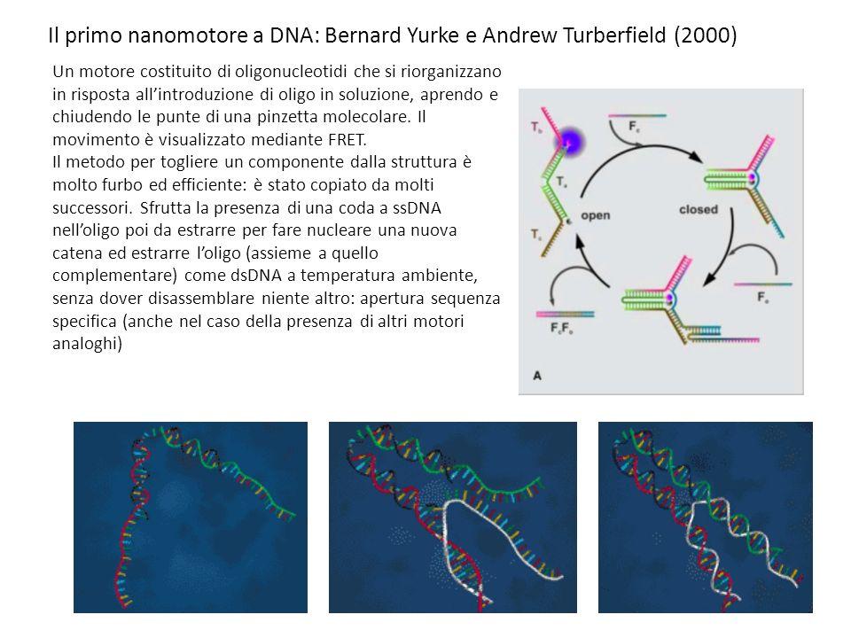 Il primo nanomotore a DNA: Bernard Yurke e Andrew Turberfield (2000) Un motore costituito di oligonucleotidi che si riorganizzano in risposta allintroduzione di oligo in soluzione, aprendo e chiudendo le punte di una pinzetta molecolare.