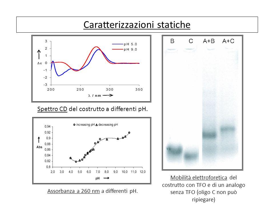 Caratterizzazioni statiche Spettro CD del costrutto a differenti pH.